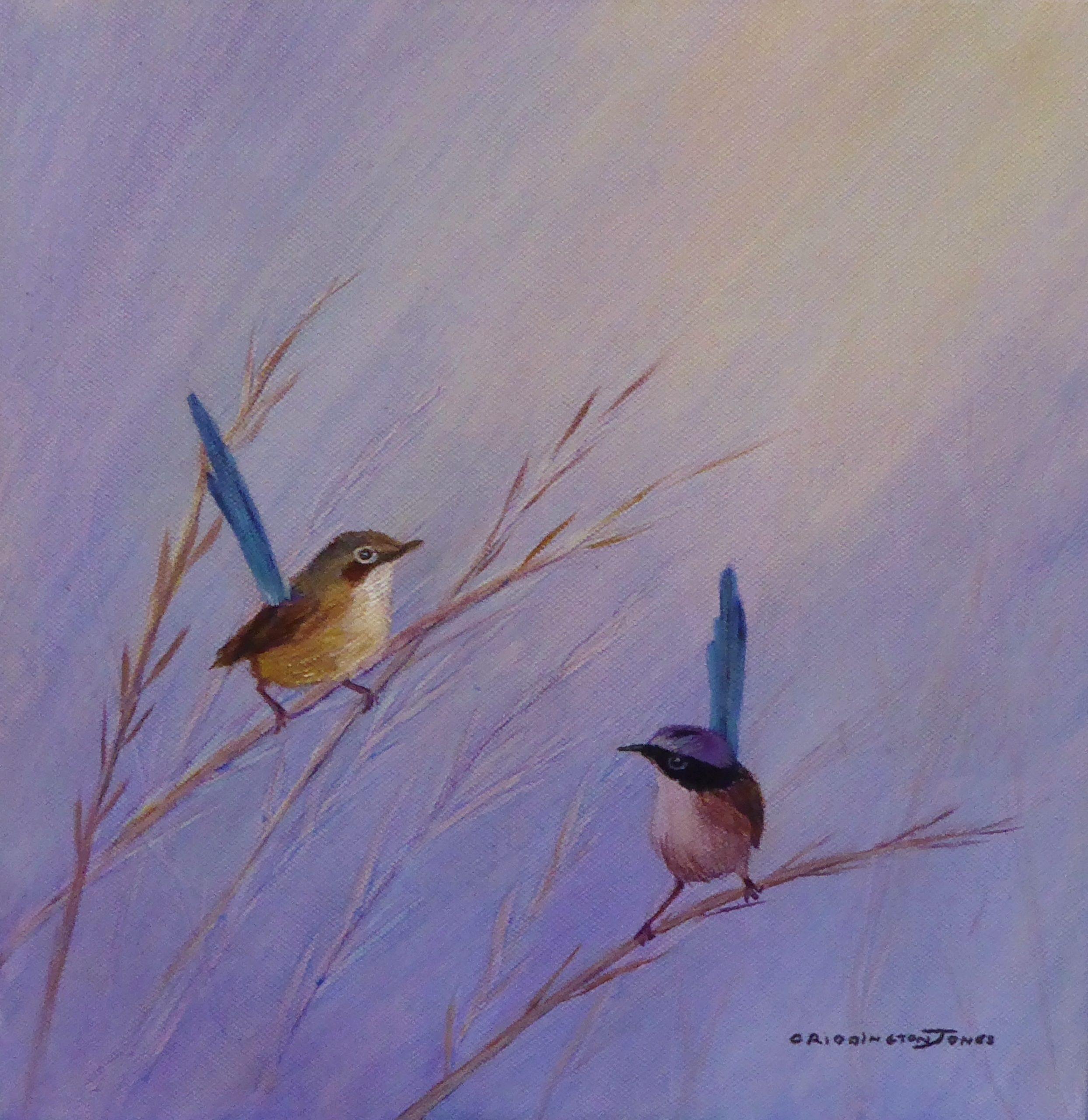 Purple-Crowned Fairy Wrens
